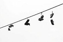 ZapatoMaron