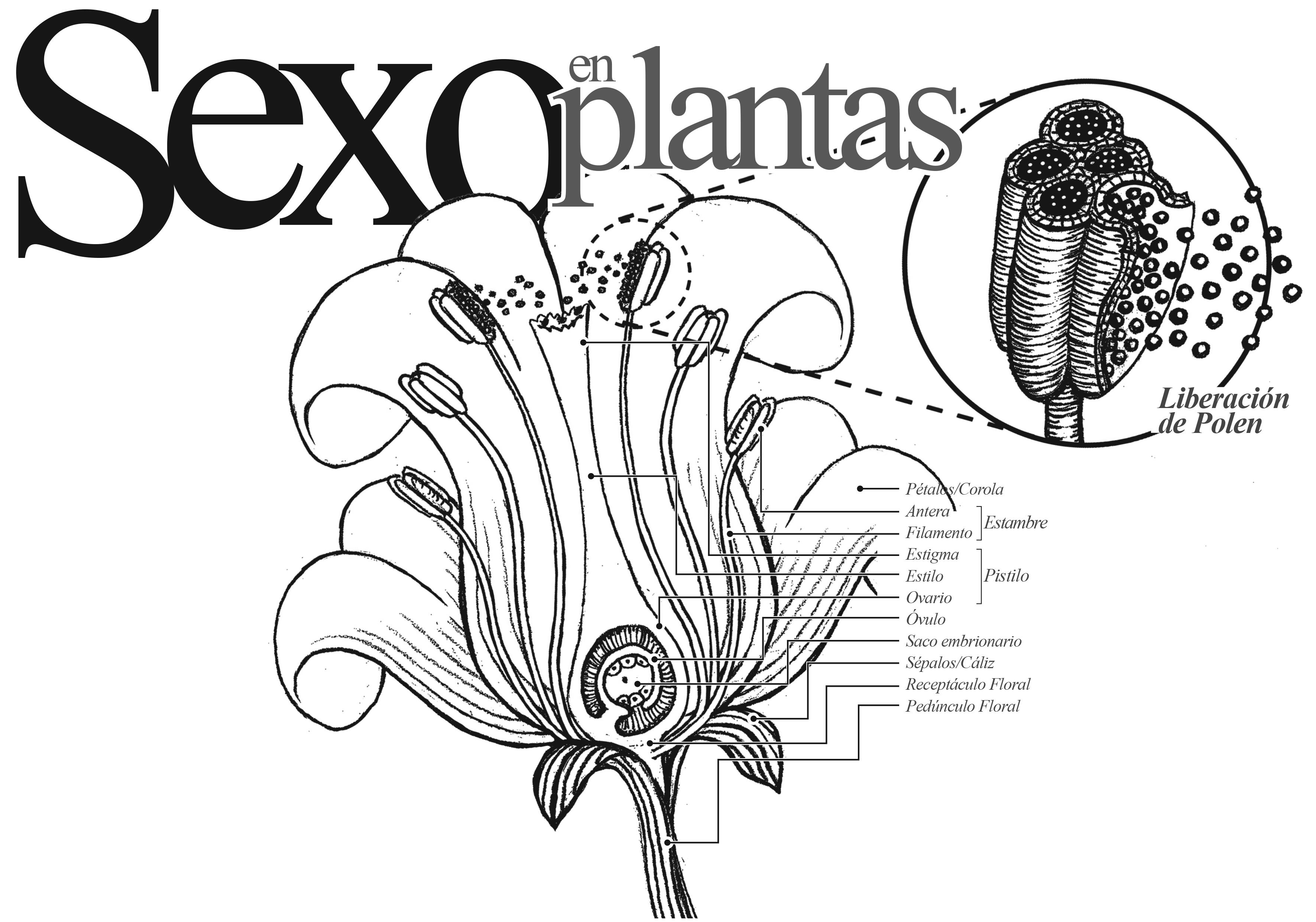 Sexo En Plantas Direccion De Comunicacion De La Ciencia