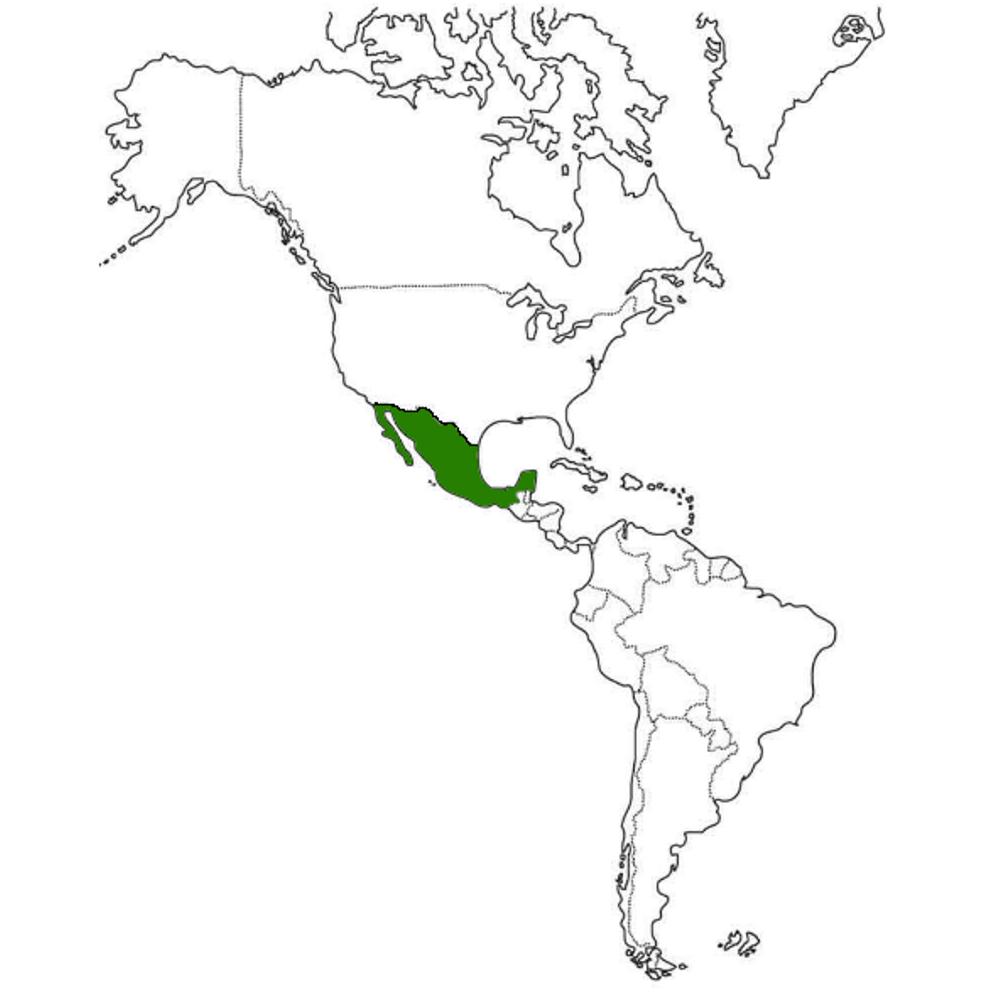 México en el continente americano