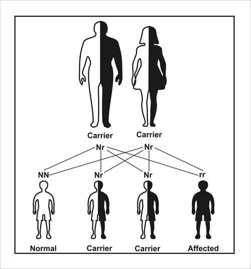 neurodegenerative diseases  the spinocerebellar ataxia