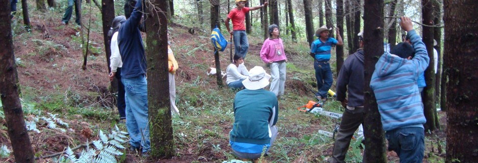 Capacitacion forestal