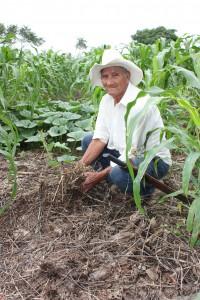 Improved soil fertity