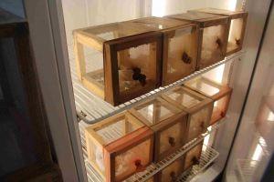 Cámaras bioclimáticas donde se conservan las larvas de la mosca mexicana de la fruta.