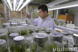 Laboratorio de Cultivo de Tejidos Vegetales del Inbioteca.