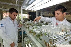 En el laboratorio se desarrollan técnicas de cultivo in vitro.