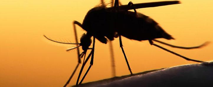 Se contempla investigar la variabilidad entre los virus del dengue y del zika (Foto: Instituto Jenner)