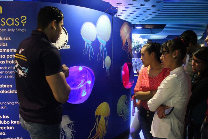 Las pequeñas medusas también fueron una de las maravillas que agradaron, especialmente por su colorido