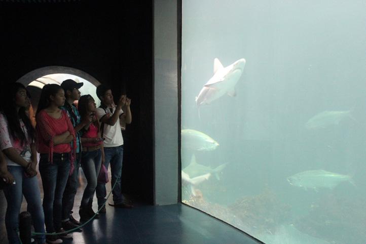 Los tiburones y los delfines fueron los animales que más sorprendieron a los jóvenes