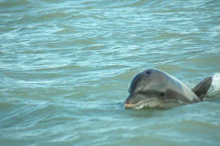 Avistamiento de delfines y otras especies marinas han sido frecuentes en costas veracruzanas
