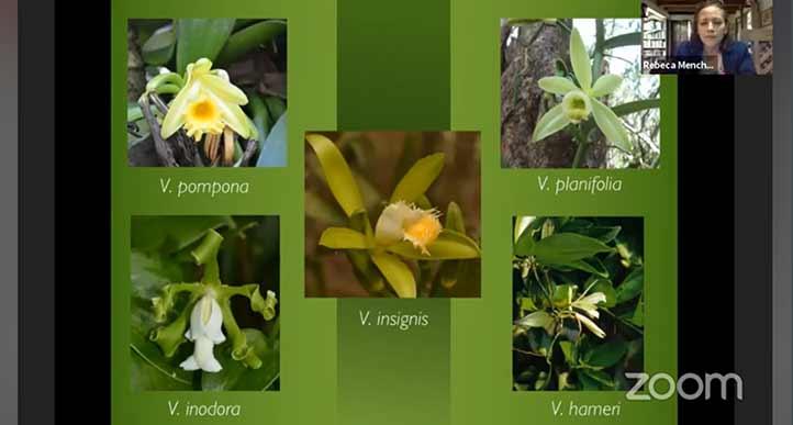 En el país se tienen 10 especies registradas del género Vanilla planifolia