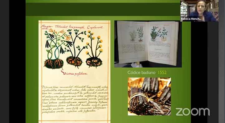 En los códices prehispánicos la vainilla ya era mencionada por sus propiedades medicinales y comestibles