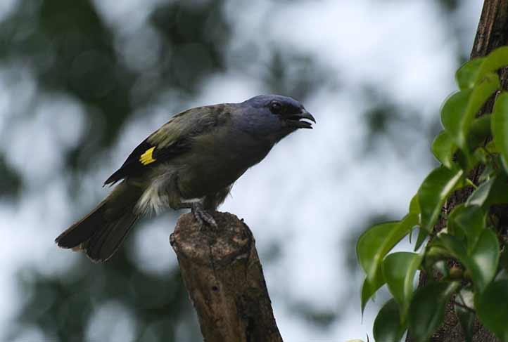 Académicos de la región Poza Rica-Tuxpan realizaron un inventario avifaunístico