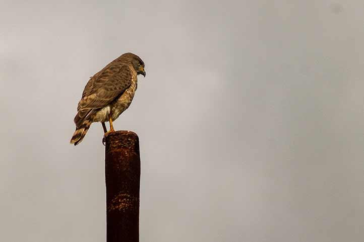 El objetivo del estudio fue mostrar cómo la urbanización ha modificado el paisaje y afectado a las aves