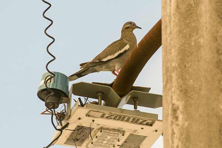 Actualmente hay pocas especies adaptadas a las condiciones urbanas
