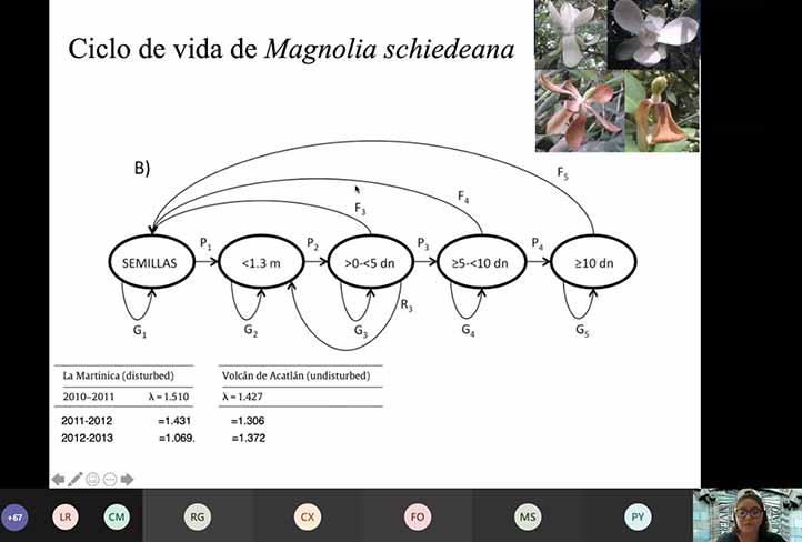 """La egresada del doctorado de Inbioteca dictó la ponencia """"Las magnolias: ecología, manejo, conservación y bioprospección"""""""
