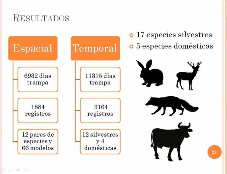 Evaluó la actividad espacio-temporal del ensamblaje de mamíferos medianos y grandes en el bosque tropical seco
