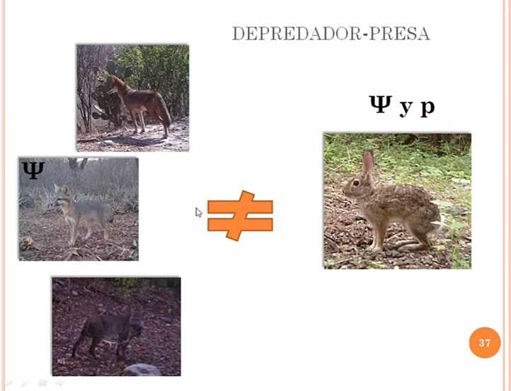 La investigación la desarrolló en la Reserva de la Biósfera Tehuacán- Cuicatlán, en los límites de Puebla y Oaxaca