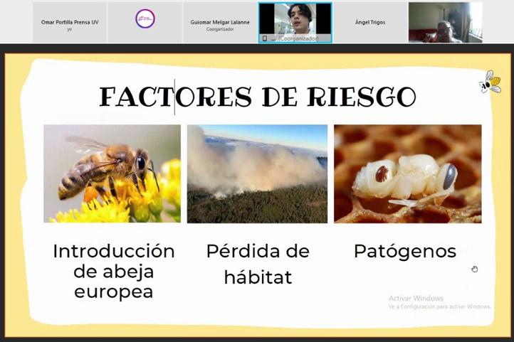 Las abejas nativas están en riesgo debido a la introducción de abejas europeas