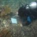 Compartirán sus estudios sobre el Golfo de México