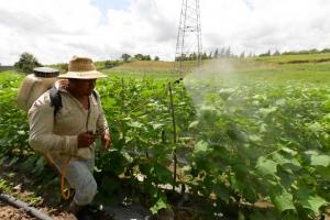 Los productores acostumbran usar fertilizante inorgánico