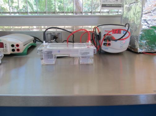 Cámara de electroforesis